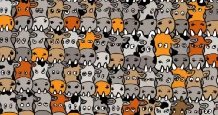Riesci a trovare il cane nascosto tra le mucche?