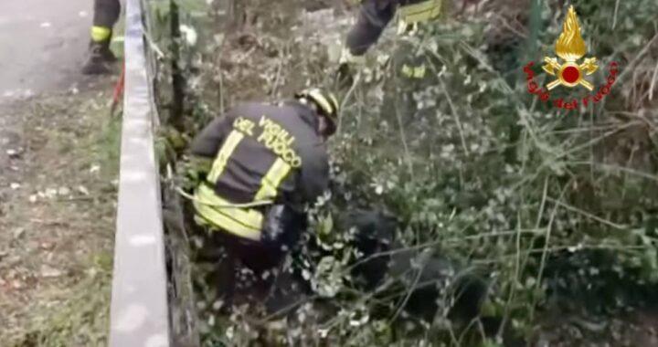 Filago, cane scivolato nel greto del fiume salvato dai pompieri, il video dell'intervento è commovente