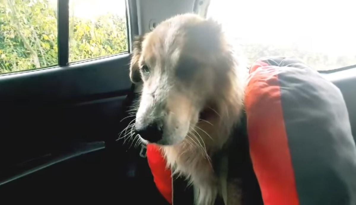 Salvo, il cane paralizzato