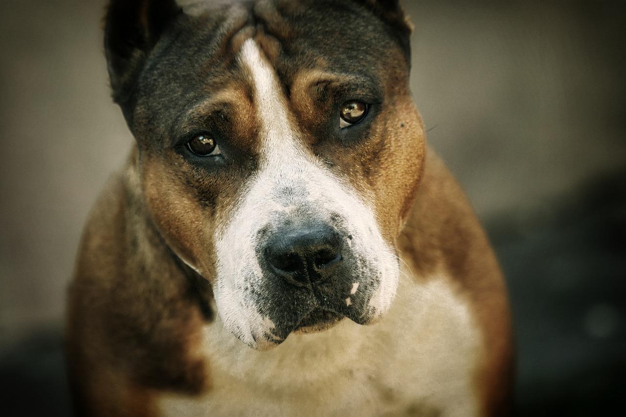 cane piange nella fogna