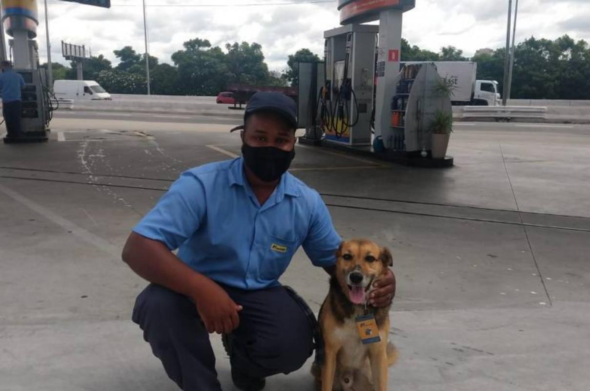 Adozione del cucciolo di strada