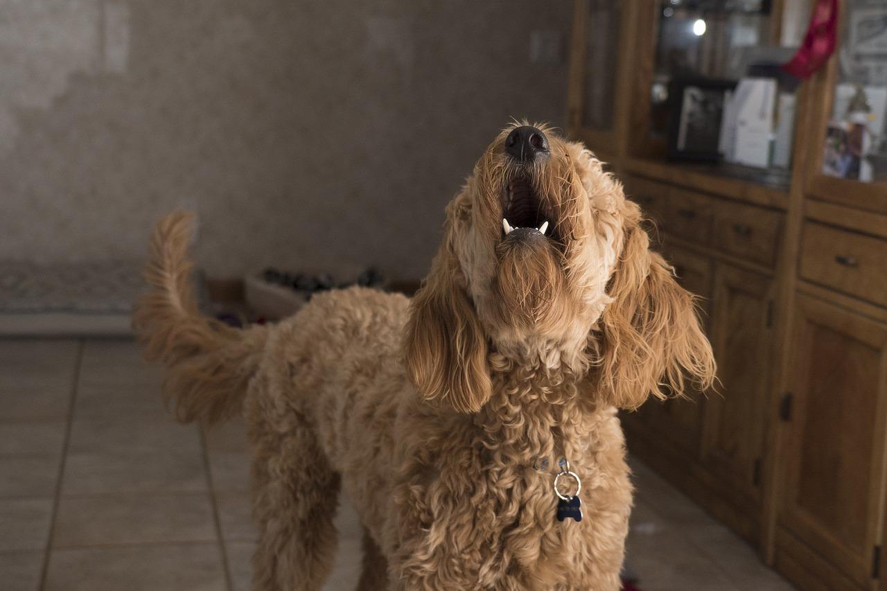 Cucciolo abbaia per attirare l'attenzione