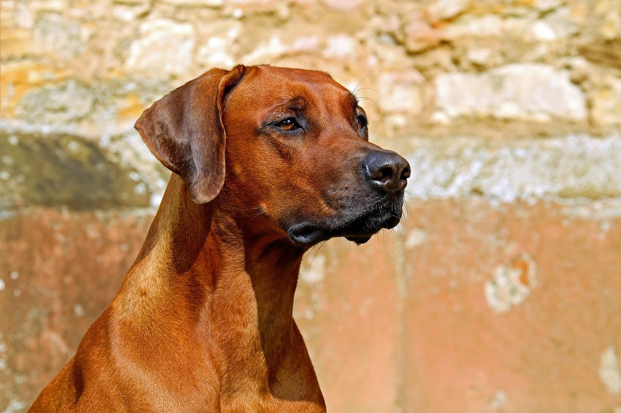 cane salva un cucciolo