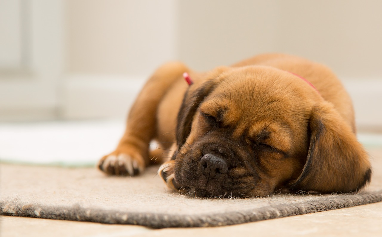 cane senza zampe anteriori