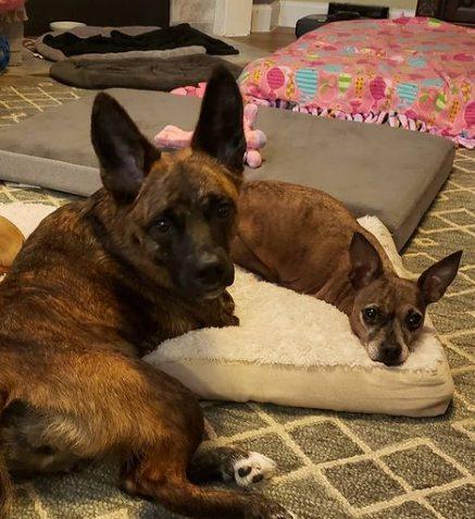 Cani disabili convivono insieme