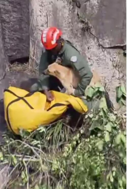 Pompieri portano in salvo il cucciolo