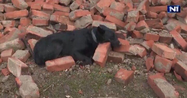 Terremoto Croazia: cane veglia le macerie della sua casa