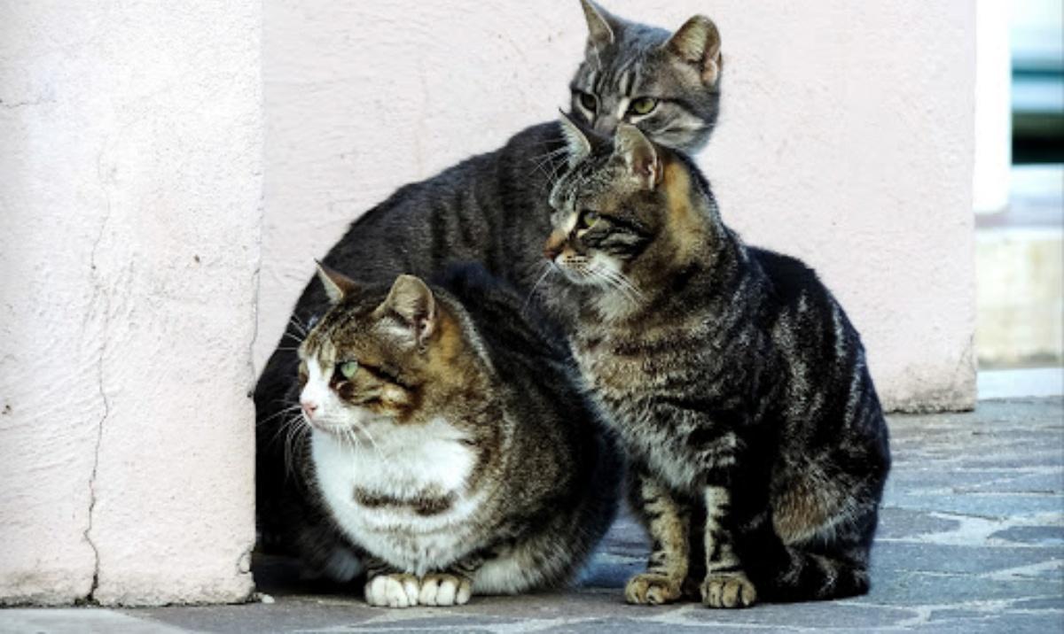 Colonia di gatti cacciata via dal parroco