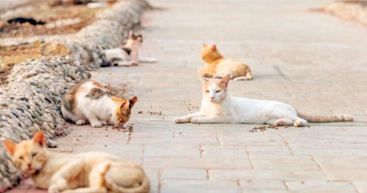 Gatti sfrattati dal parroco: ecco cosa è accaduto e come hanno reagito le volontarie