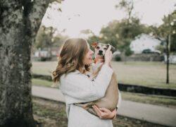 come-accarezzare-un-cane