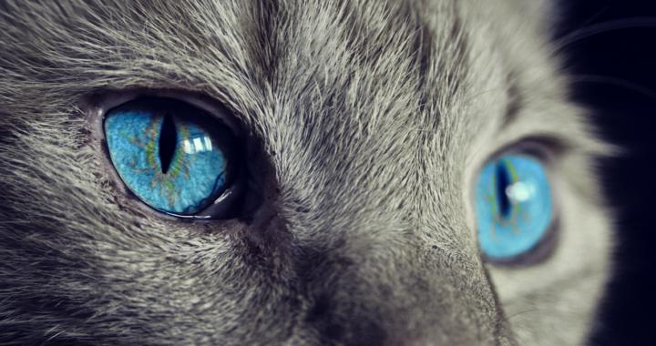 come vedono gli animali il mondo