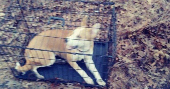 Cucciola husky abbandonata chiusa in una gabbia nel mezzo di una foresta aveva il destino segnato