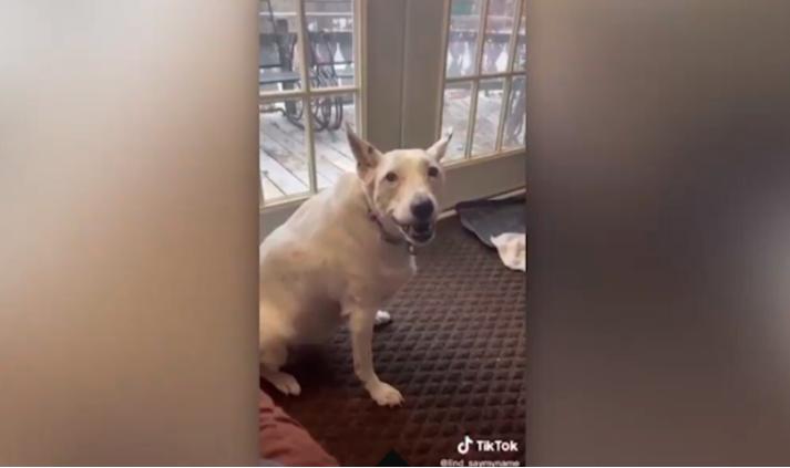Il cane prova ad abbaiare