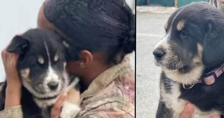 Cuccioli portati via: la mamma si dispera e una soldatessa cerca di consolarla. Pochi mesi dopo la donna è costretta a tornare nel suo paese e non gli fanno portare con se la cagnolina. Cosa ha fatto