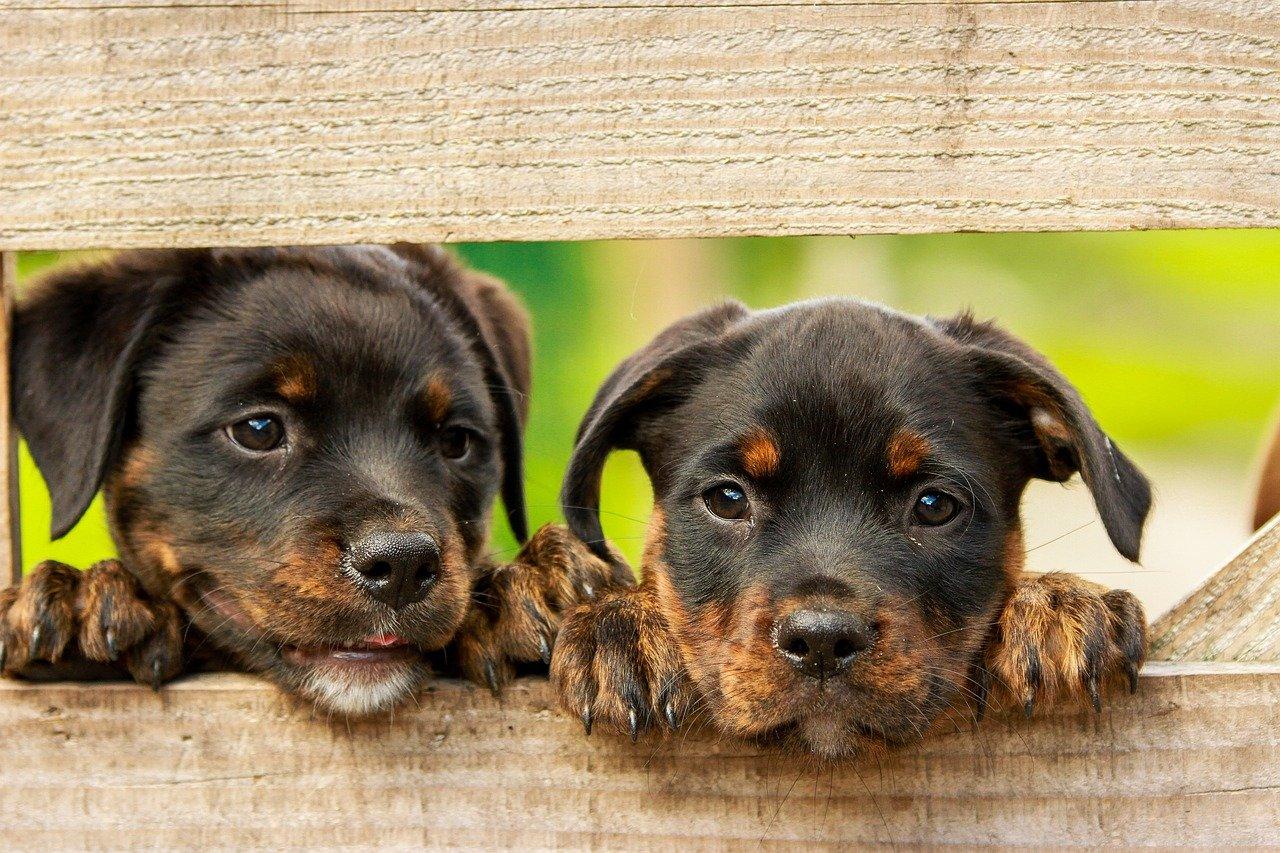 cuccioli portati via