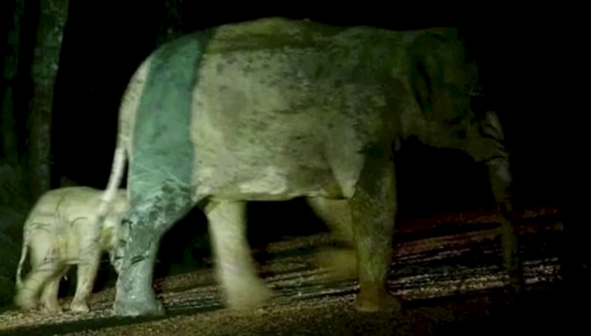 Soccorritore salva un cucciolo di elefante
