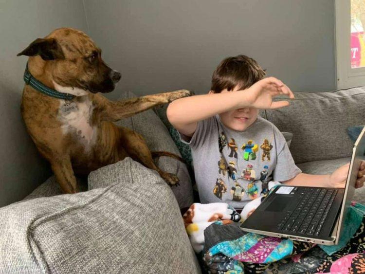 Il cane Jake e il suo miglior amico Owen