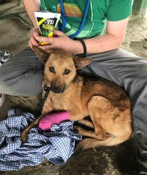 Il cane Sandy è in salvo