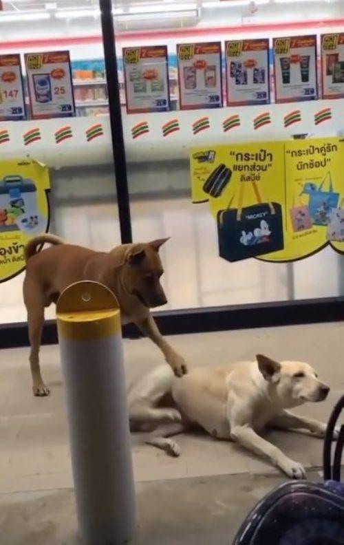 I cani si aiutano  a vicenda