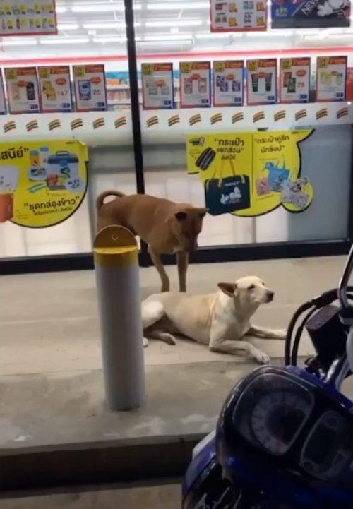 Cani che vivono in strada