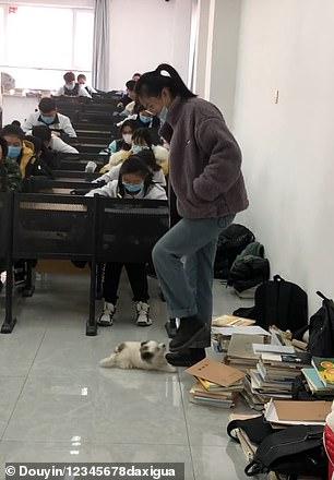 Cane aiuta la studentessa al test