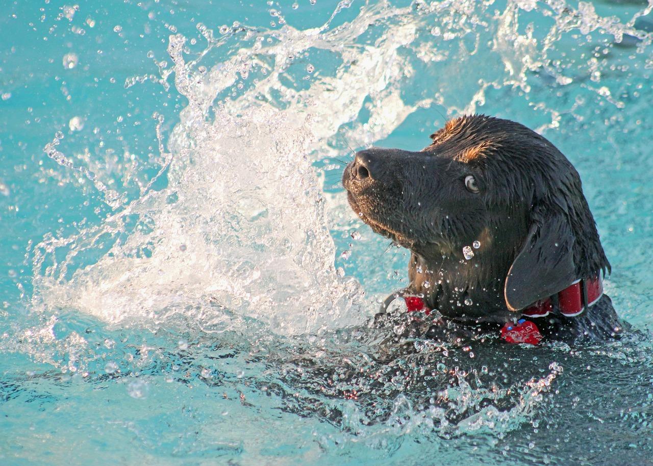 Cane nuota in piscina