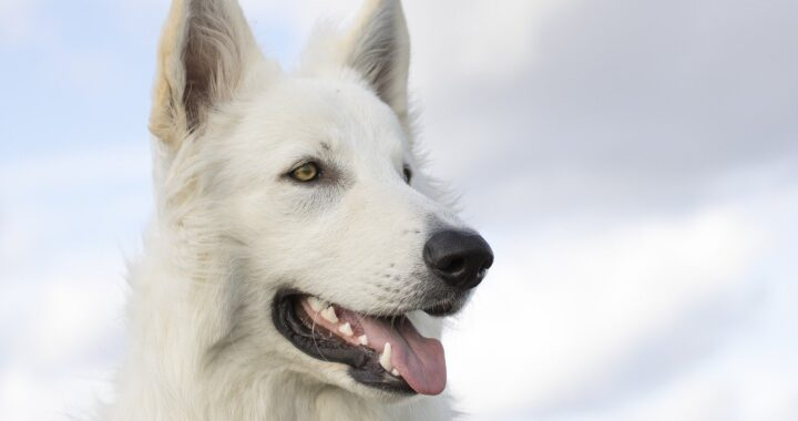 Cucciolo scomparso da 3 anni: commovente il video in cui la famiglia lo riabbraccia