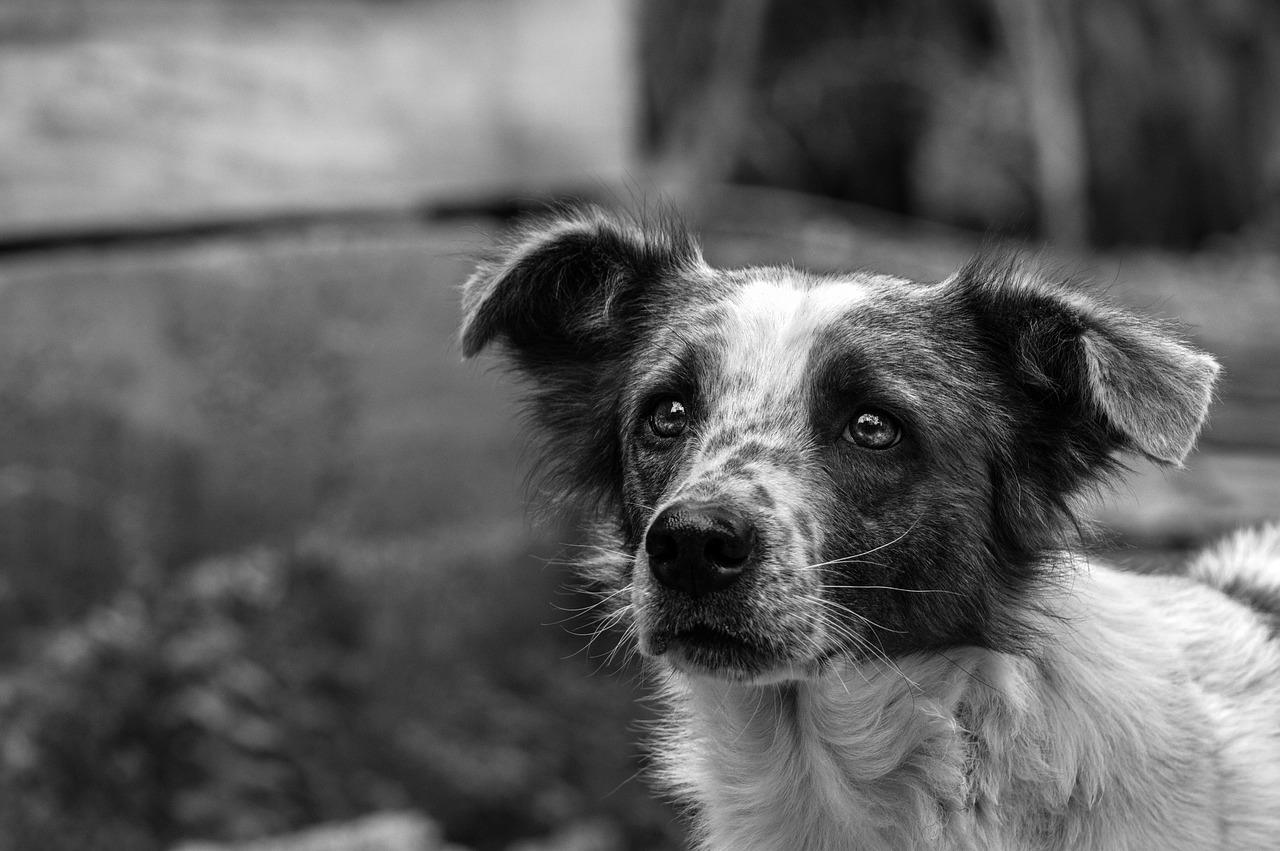 Cucciolo terrorizzato in autostrada