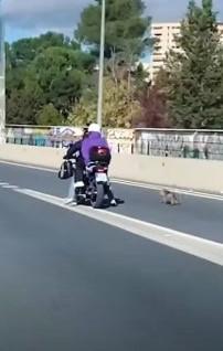 Salvare un cane in mezzo alla strada