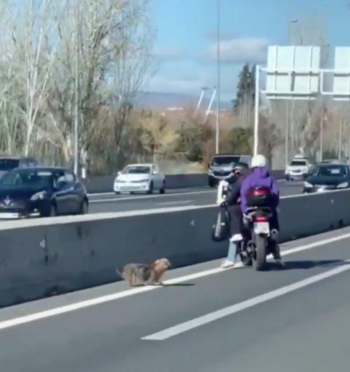 Cane in pericolo in mezzo a una strada