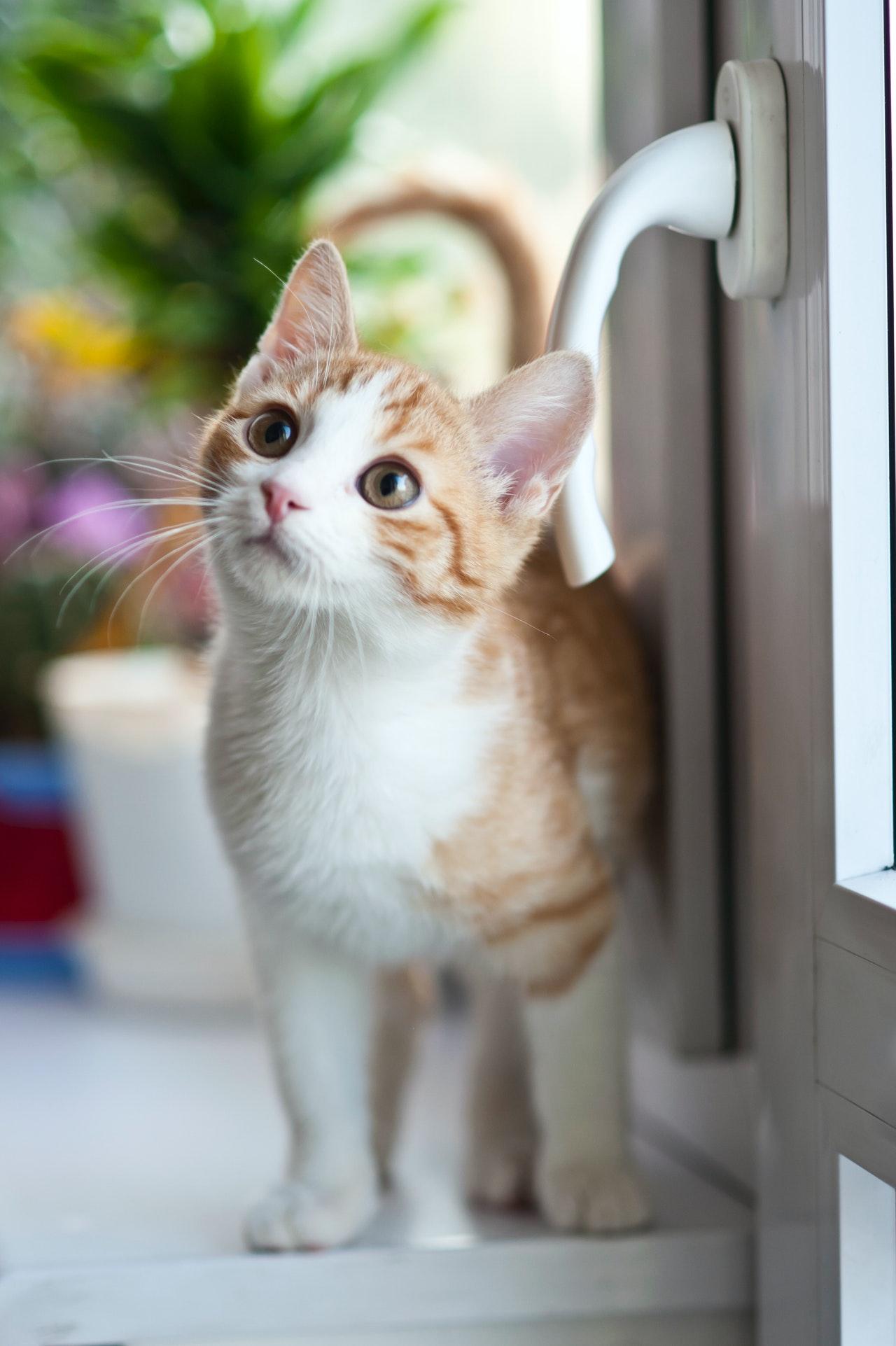 curare-il-gatto