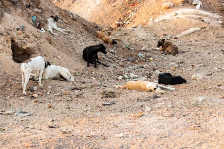 Cani aiutati da Margareth Medeiros