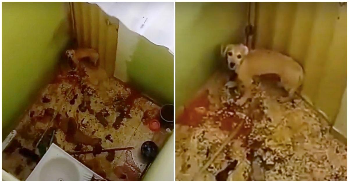 Il salvataggio di due cagnolini