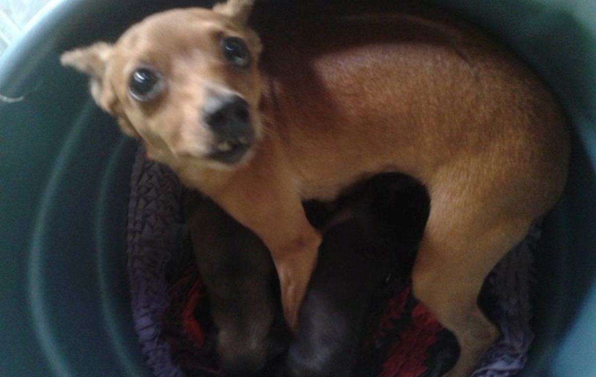 Due cani eroi salvano un cagnolino appena nato