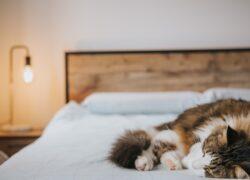 errori-da-evitare-con-i-gatti