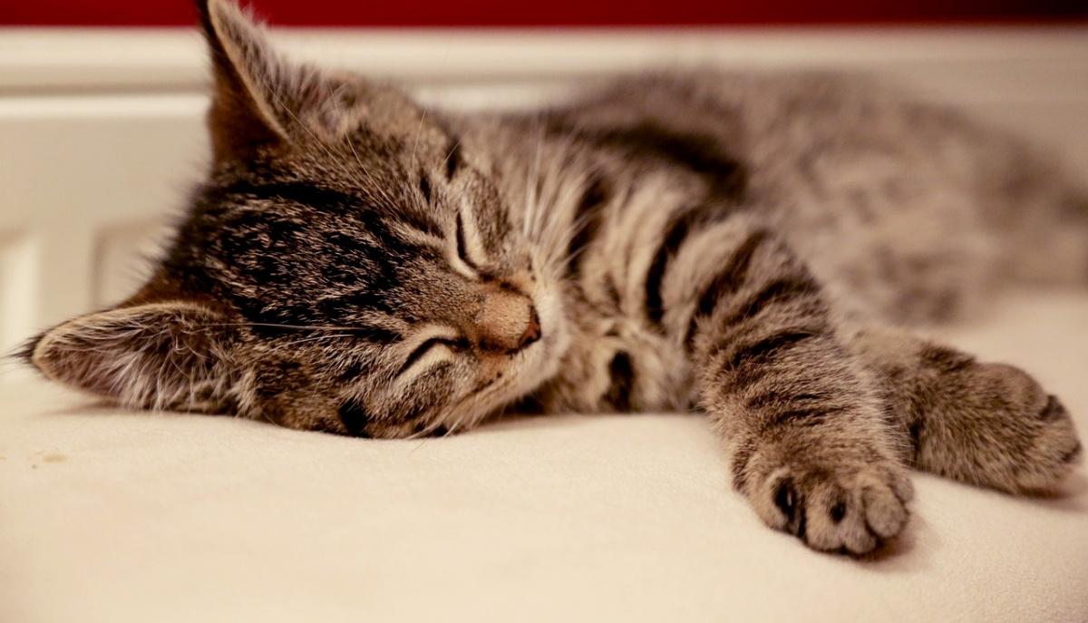 Gattino rimasto solo dopo la morte del suo umano