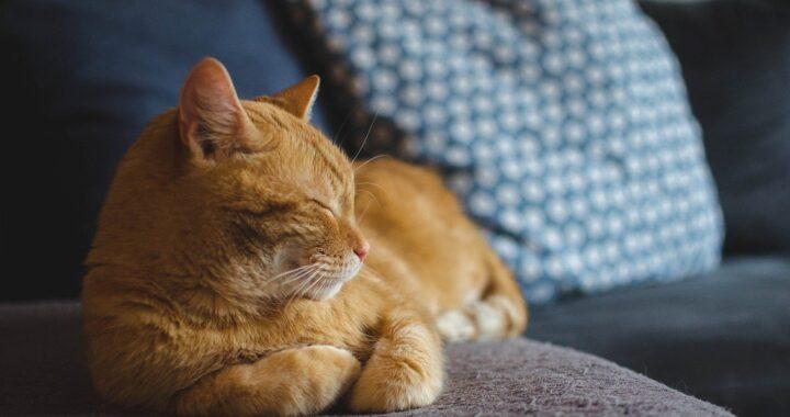 gatto a casa di un altro