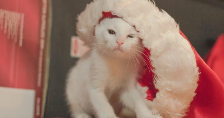 gatto depresso a natale
