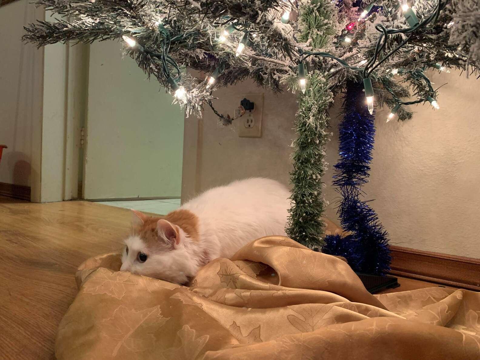 Ginger e il suo albero di Natale
