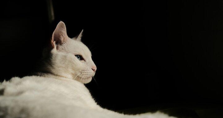 gatto premuroso