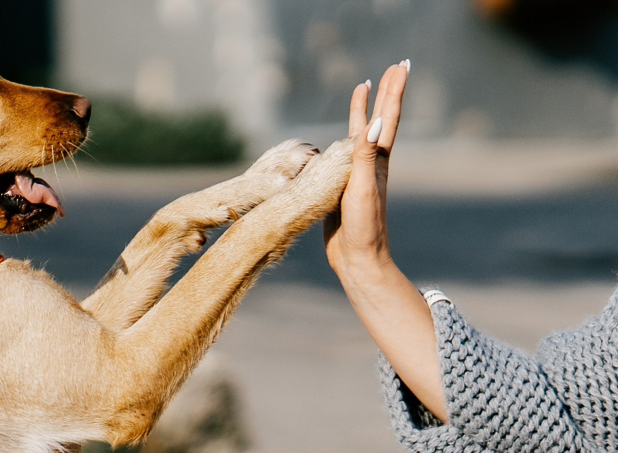 cane benedice i fedeli