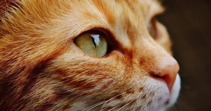 gatto ama il peluche
