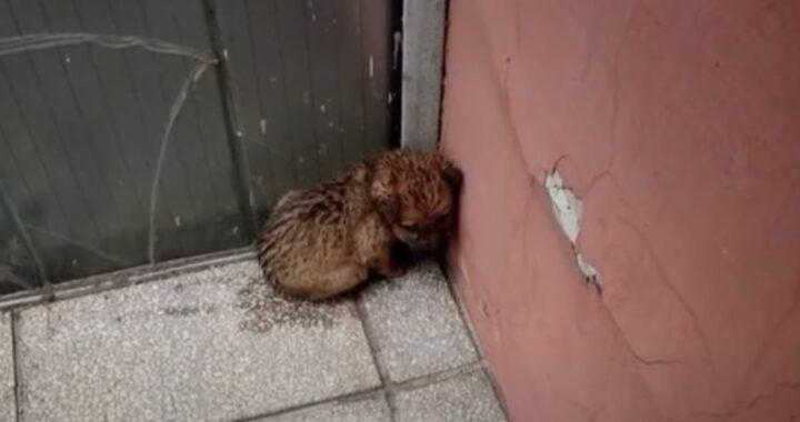 """Aggredita dai corvi e lasciata ferita e tremante in un angolo della strada: """"Ha scattato una foto e se n'è andato"""""""