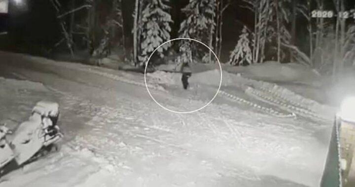 Jack Russell difende il suo amico umano dall'aggressione di un lupo: il video mostra il suo coraggio