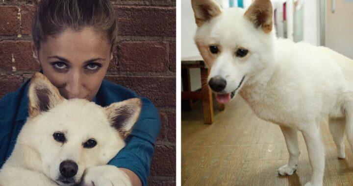 Ragazza vola fino in Corea per salvare la vita di Jindol, un cane trovato in un allevamento