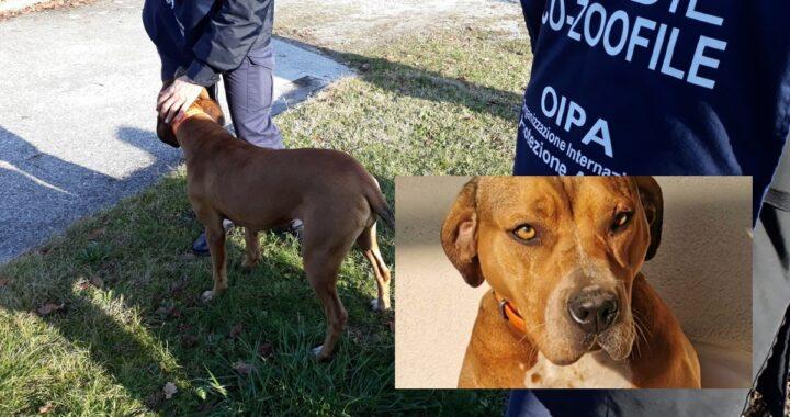 Udine, denunciato un uomo grazie a foto e video: ecco cosa faceva alla sua cagnolina e come sta oggi l'animale