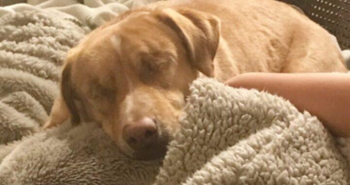 La nuova vita del cane Louis