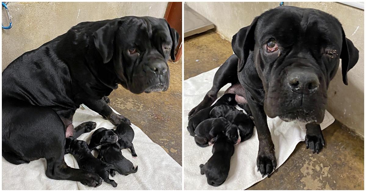 Il salvataggio di una mamma cane e dei suoi cuccioli