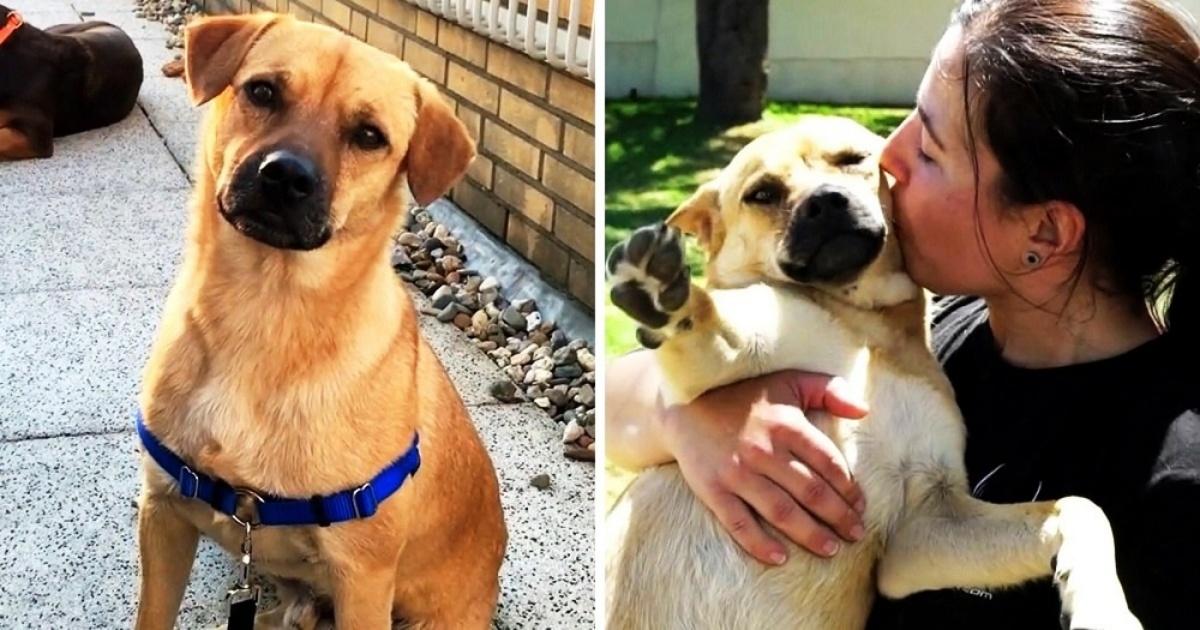 La storia del cane Otto