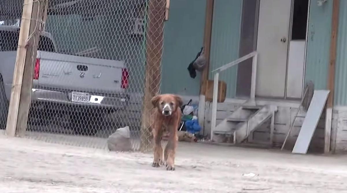 Il salvataggio del cane Pax